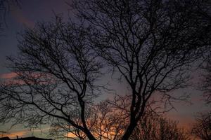 Silhouette des kahlen Baumes foto