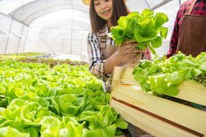 Frau sammelt Salat