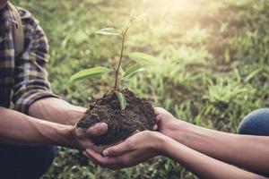 junges Paar trägt Setzlinge zum Pflanzen foto
