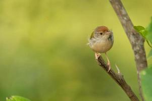 kleiner Vogel thront auf Ast