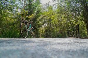 niedrige Winkelansicht eines Fahrrads, das auf leerer Straße im tropischen Wald geparkt wird