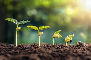 Sojabohnenwachstum in der Farm mit grünem Hintergrund foto