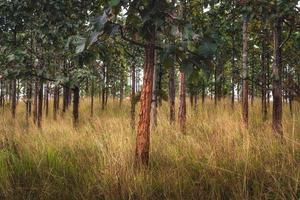 Bäume und Feld foto