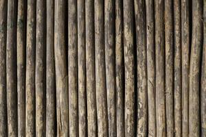 Detail von Wildrohrschächten foto