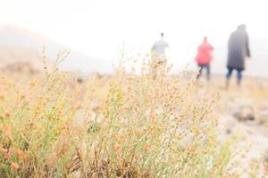 ein Busch kleiner wilder Blumen auf der Wiese foto