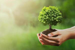 Hände halten Baum und Dreck foto