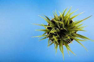 flache Laienansicht der Pflanze foto