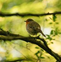 kleiner Vogel auf Ast