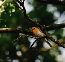 brauner und weißer Vogel auf Ast foto