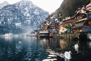 Schwäne und Dorf in der Nähe von Wasser foto