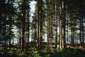 grüne Bäume im Sommer