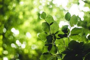 grünblättrige Pflanzen foto