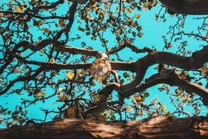 Laterne auf Zweigen mit klarem blauem Himmel foto