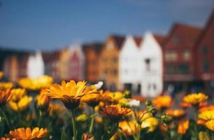 bunte Blumen in voller Blüte foto