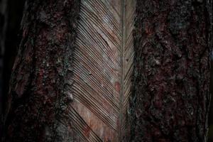 brauner und schwarzer Baumstamm foto