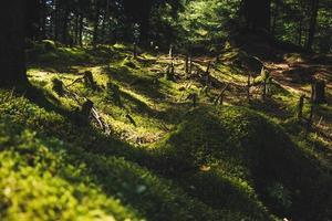 grünes Gras in der Sonne foto