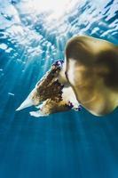 Quallen unter Wasser im Meer foto