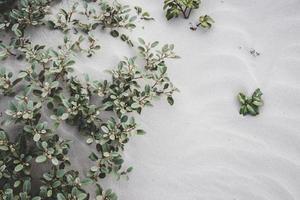 Pflanzen unter dem Sand hervor foto
