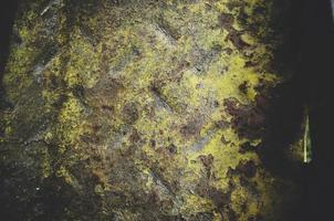 grünes und braunes Moos foto