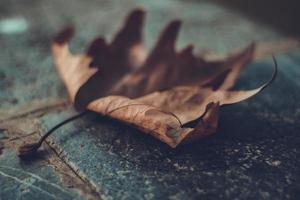 Nahaufnahme des braunen Blattes auf dem Boden foto