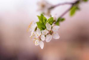 weiße Blütenblüte foto