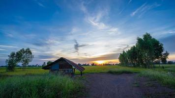 Hütte in den grünen Reisfeldern mit Sonnenuntergang foto