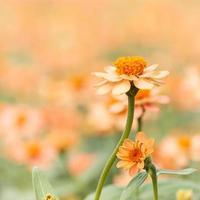 gelbe und orange Blüten foto