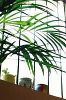 grüne Pflanze neben dem Fenster foto
