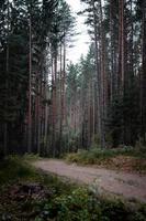brauner Feldweg foto