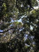 Wurmperspektive auf grüne Bäume
