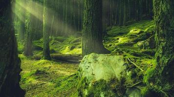 grünes Moos auf Baumstämmen