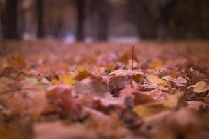 verwelkte Blätter im Erdgeschoss foto