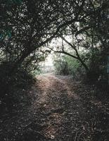 grüne Bäume und braune getrocknete Blätter auf dem Bodenweg foto