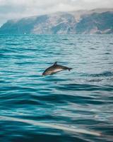 grauer Delphin auf dem Wasser foto