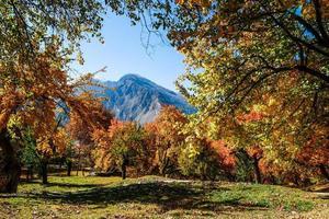bunte Laubbäume im Herbst foto