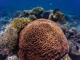 Korallenriff unter Wasser