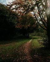 Laub auf dem Weg neben dem Baum foto