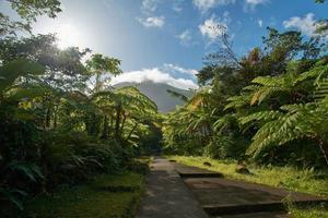 gepflasterter Weg zwischen Bäumen und Pflanzen foto