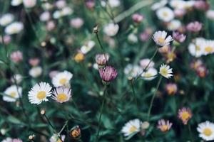 bunte Blumen blühen foto