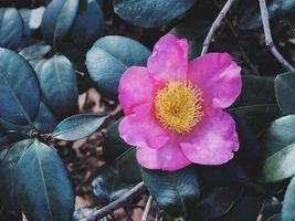 rosa Blütenblatt durch grüne Blätter foto