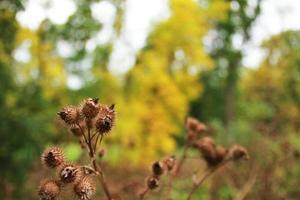 braune Obstpflanzen im Freien