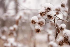 schneebedeckte Pflanzen im Freien