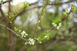 weiße Blütenblätter in einem Wald foto