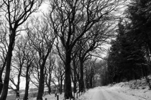 Graustufenfoto eines schneebedeckten Feldes mit kahlen Bäumen