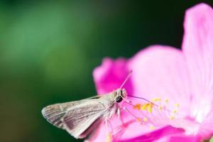 braune und weiße Motte foto
