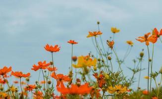 schöne Blumen blühen