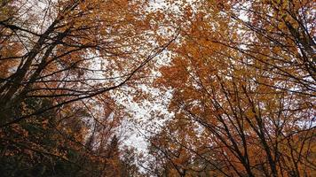 Blick auf Herbstlaub foto