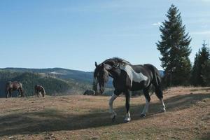 Landschaft mit einem Pferd foto