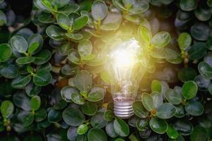 Glühbirne vor den Blättern