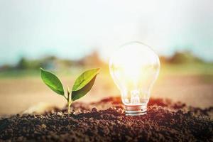 Energiesparende Glühbirne und Bäume am Boden
